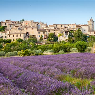Village, France, Saignon, Lavender, Lavender Colored, French Culture, Provence-Alpes-Cote d'Azur, Field, Cultures, House, Vaucluse, Agriculture, Blossom, Building Exterior, Built Structure
